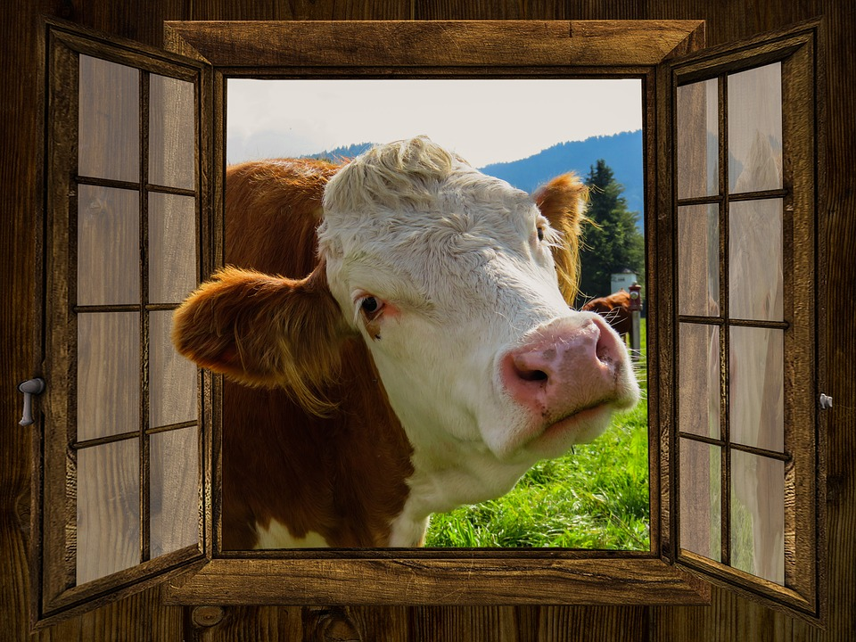 Is there value in psychometric profiling or is it a load of bull?